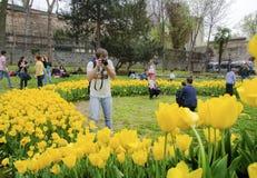 Estambul Tulip Festival Festivales estacionales del tulipán celebrados adentro Foto de archivo