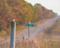 Estamenha de neve que chega para o inverno em um polo de madeira com a estrada do cascalho do país em Wisconsin rural com as árvo imagem de stock royalty free