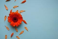 Estampado de flores azul claro del fondo Fotografía de archivo libre de regalías