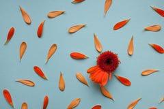 Estampado de flores azul claro del fondo Imágenes de archivo libres de regalías