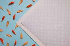 Estampado de flores azul claro del fondo Imagen de archivo libre de regalías