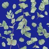 Estampado de flores con las ramas del eucalipto, pintura de la acuarela en el fondo blanco Foto de archivo libre de regalías