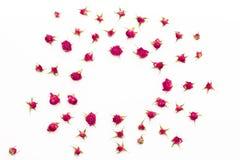 Estampado de flores de rosas en un fondo blanco Fotos de archivo libres de regalías