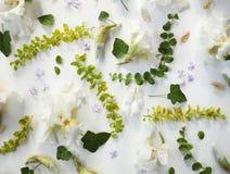 Estampado de flores del día de fiesta del iris blanco, brotes, pequeñas flores púrpuras Foto de archivo libre de regalías