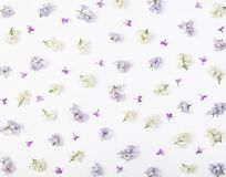 Estampado de flores hecho de la primavera blanca y de las flores violetas de la lila aisladas en el fondo blanco Endecha plana imagenes de archivo