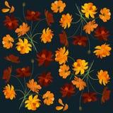 Estampado de flores hermoso con las flores anaranjadas del cosmea Imagen de archivo libre de regalías