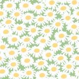Estampado de flores inconsútil con las manzanillas Imagenes de archivo