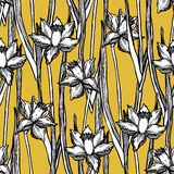 Estampado de flores inconsútil de la primavera de los narcisos del narciso Fotografía de archivo libre de regalías