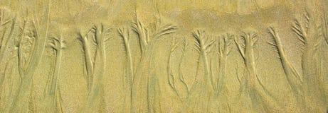 Estampado de flores natural de la arena en la playa arenosa plana durante marea baja foto de archivo libre de regalías