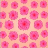 Estampado de plores: brotes rosados de las rosas de un cosmece en un fondo ligero del melocotón, situadas en un círculo - impresi Imagen de archivo libre de regalías