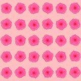 Estampado de plores: brotes rosados de rosas en el fondo ligero del melocotón, modelo hermoso de la primavera Fotografía de archivo