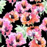 Estampado de plores de la amapola del Wildflower en un estilo de la acuarela aislado Imagen de archivo