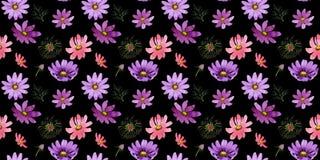 Estampado de plores del kosmeya del Wildflower en un estilo de la acuarela aislado Imagen de archivo libre de regalías