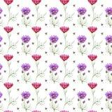Estampado de plores del kosmeya del Wildflower en un estilo de la acuarela aislado Imagenes de archivo