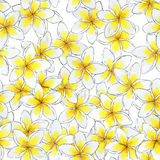 Estampado de plores inconsútil de la acuarela Estampado de flores del Plumeria Imagenes de archivo