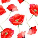 Estampado de plores de la amapola del Wildflower en un estilo de la acuarela Imagen de archivo libre de regalías