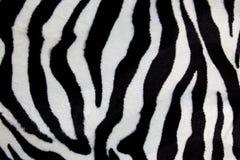 Estampado de zebra Imágenes de archivo libres de regalías