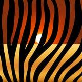 Estampado de zebra en el fondo del sol de la puesta del sol, piel animal, rayas blancos y negros stock de ilustración