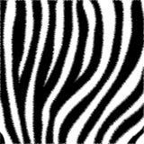 Estampado de zebra peludo, piel animal, lana, rayas blancos y negros ilustración del vector