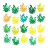 Estampados de flores inconsútiles de la belleza en fondo verde Imagenes de archivo