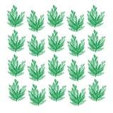 Estampados de flores inconsútiles de la belleza en fondo verde Imágenes de archivo libres de regalías