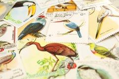 Estampilles d'oiseaux Images libres de droits