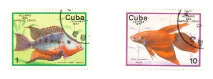 Estampilles du Cuba avec des poissons Photos libres de droits