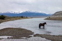 Estancia Cristina Patagonia Argentina royaltyfri foto