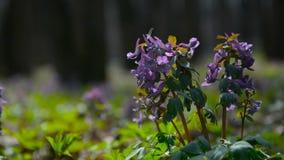 estancia de las flores en el viento metrajes
