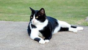 Estancia del gato en el parque Fotografía de archivo libre de regalías