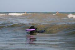 Estancia del Schnauzer gigante con un tirador en la línea de la resaca en las ondas en el mar fotografía de archivo libre de regalías