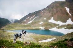 Estancia sola del perro en las rocas del fondo y de la nieve de las montañas y el lago azul fotografía de archivo libre de regalías