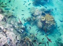 Estanque de peces tropical en el hotel intercontinental del centro turístico y del balneario en Papeete, Tahití, Polinesia france Foto de archivo