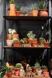 Estante con los cactus en el verde de la tienda suculento en un pote de arcilla en interior del desván en estilo escandinavo fotografía de archivo