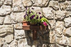 Estante de madera de la pared con los floreros de flores, encendidos para arriba por el sol, enganchado a la pared de la casa, co fotos de archivo libres de regalías