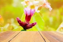 Estante de madera vacío del piso del tablero de la textura con la flor en fondo de la naturaleza fotos de archivo