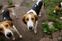 Estante de perros de perros Fotos de archivo libres de regalías