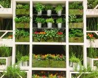 Estante que cultiva un huerto - ramo de palnts Foto de archivo libre de regalías