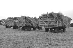 Estantes cargados con los paquetes para trillar (blanco y negro) Imagenes de archivo