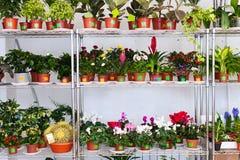 Estantes con las flores en potes Fotos de archivo libres de regalías