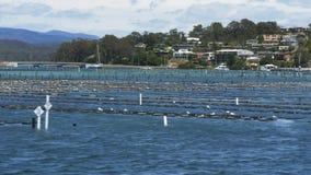 Estantes de la ostra y el puente en el merimbula en nsw almacen de metraje de vídeo
