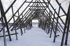 Estantes de madera para secar el estocafís en Noruega Imágenes de archivo libres de regalías