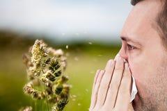 Estação da alergia Foto de Stock