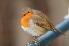 Estar de competência o pássaro Imagem de Stock Royalty Free
