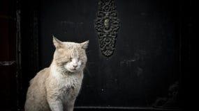 Estar do sono do gato na frente de uma porta da mesquita no distrito de Sultanahmet Imagem de Stock
