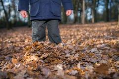 Estar entre as folhas de outono foto de stock royalty free