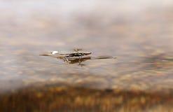 Estar na água Fotos de Stock