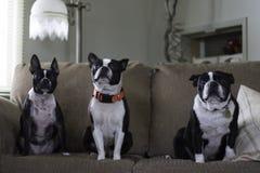 3 estarolas Foto de Stock Royalty Free