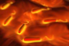 bactérias haste-dadas forma Grama-negativas ilustração do vetor