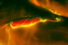 bactérias haste-dadas forma Grama-negativas ilustração royalty free
